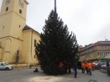 Příbramské náměstí ode dneška zdobí vánoční strom (15)