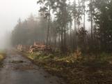Les na Červené se mění. Jehličnaté stromy nahradí buky a duby ()