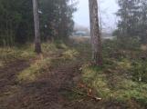 Les na Červené se mění. Jehličnaté stromy nahradí buky a duby (1)