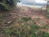 Les na Červené se mění. Jehličnaté stromy nahradí buky a duby (2)