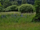 Okolí Padrťských rybníků v posledních týdnech doslova zmodralo (1)