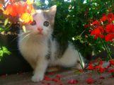 Nejhezčím mazlíčkem Příbramska je kočička Micka, třetí překvapivě slepice ()