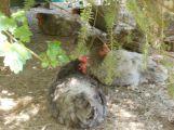 Nejhezčím mazlíčkem Příbramska je kočička Micka, třetí překvapivě slepice (2)