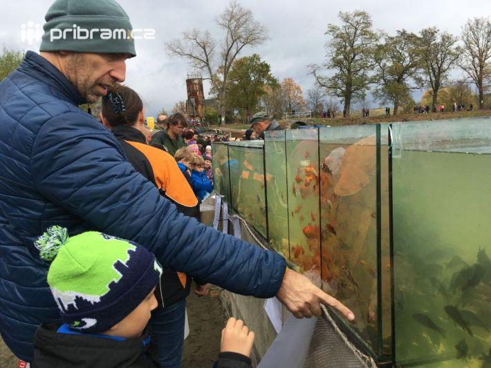 Každoroční výlov dublovického rybníka Musík si …