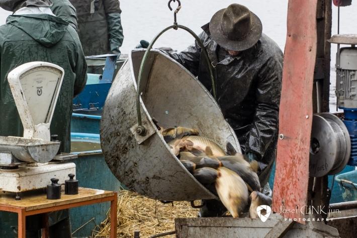 Hlavní lovnou rybou na Padrtích je kapr, dále …