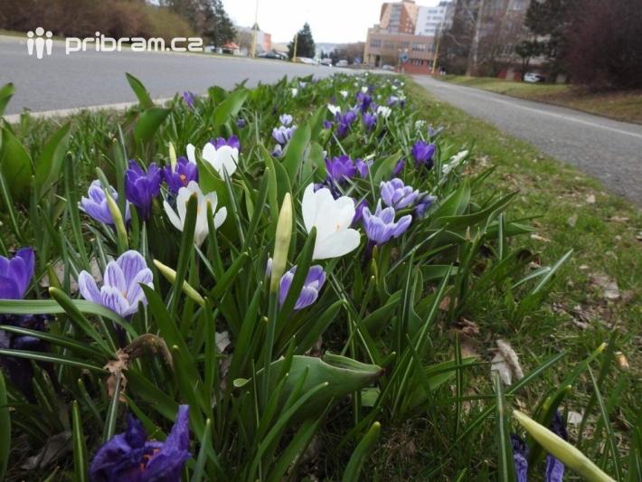Jako každé jaro začínají probouzet příjemné …