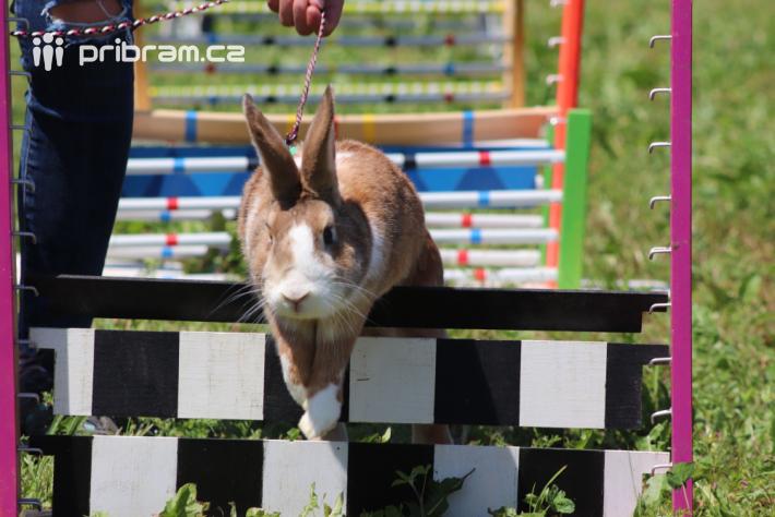 To, že králíci rádi hopkají, ví každé malé …