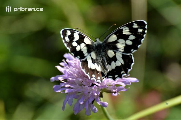 Na výpravu za ptactvem a především motýly se …