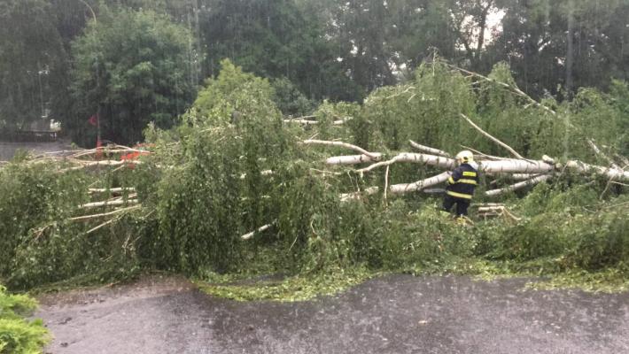 Padlý strom v Milínské ulici