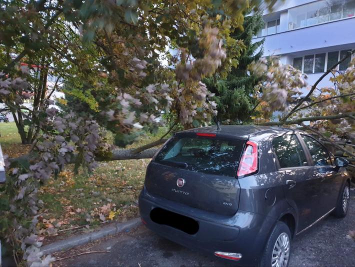 Strom poškodil zaparkované auto - Fantova louka