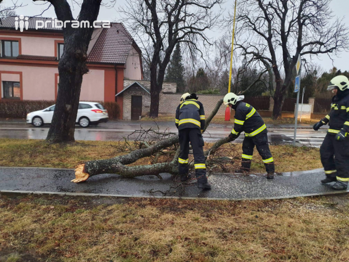 Hasiči odstraňují padlý strom v Žižkově …