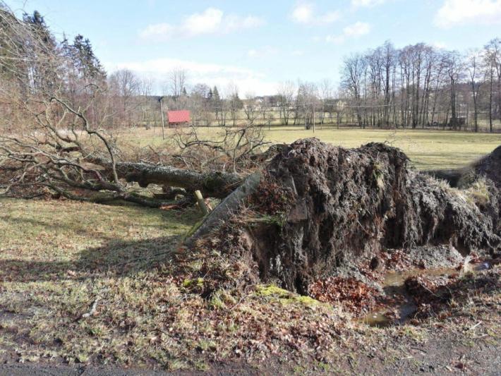 Vyvrácené stromy u Hvožďan.Foto: Markéta …