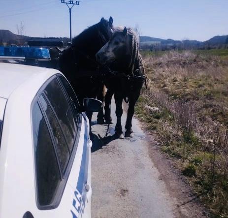 Strážníci městské policie vPříbrami byli …