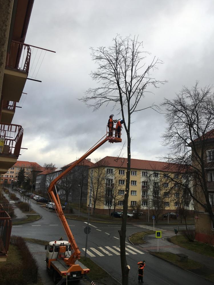 Výsadba stromů - náhrada vykácených ( např. v …
