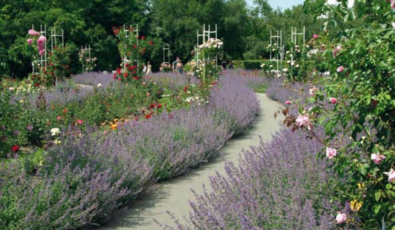 Růžová zahrada v okolí Hořejší Obory  JMÉNO …