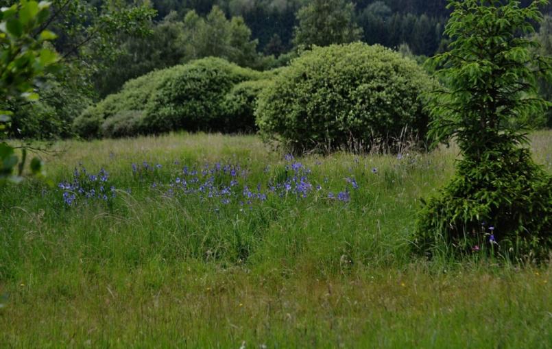 Okolo Padrťských rybníků se nachází rozsáhlé …