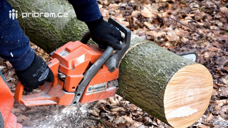 Další stromy určené k pokácení