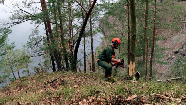 Ochránci přírody zachraňují u Vltavy vzácné motýly a brouky