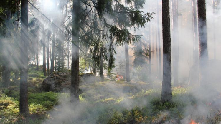 Od zítřejšího rána nastanou ideální podmínky pro riziko požárů. K teplu se připojí i silný vítr