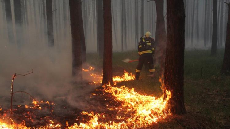 Hasiči bojují s rozsáhlým požárem lesa