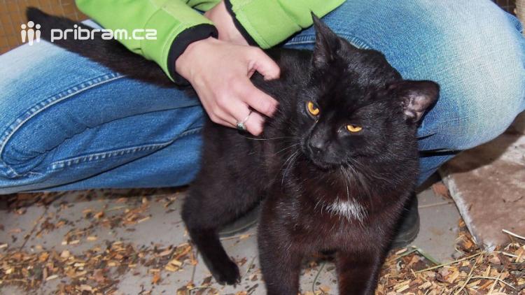 Kočky, ač zvány domácí, zůstávají i nadále šelmami a žijí si vlastním životem