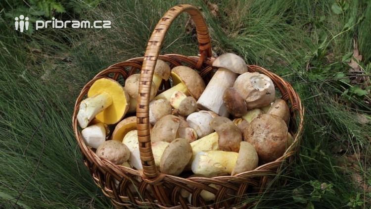 Jsou houby na Příbramsku nasáklé olovem?