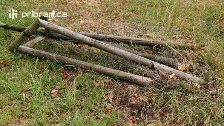 Smutné: Útok vandalů tentokrát nepřežil mladý kaštan