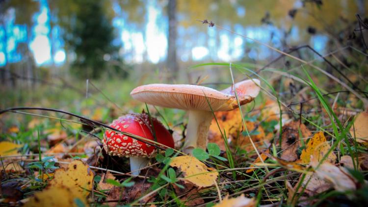 Otrava houbami: poznáte příznaky a umíte dát první pomoc?