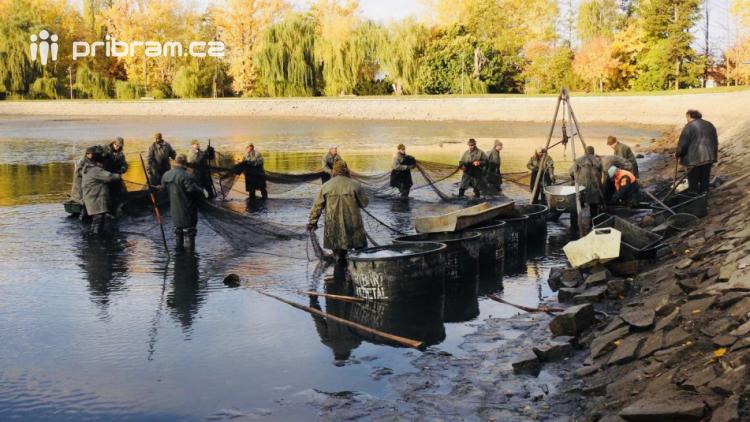 V Novém rybníce plavalo zhruba 7 metráků lína obecného