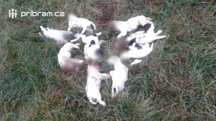 Bylo nalezeno devět mrtvých štěňat, desáté bojuje o život