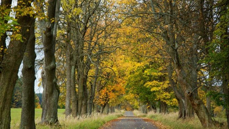 Historické stromořadí v Brdech soutěží o titul nejkrásnější aleje roku