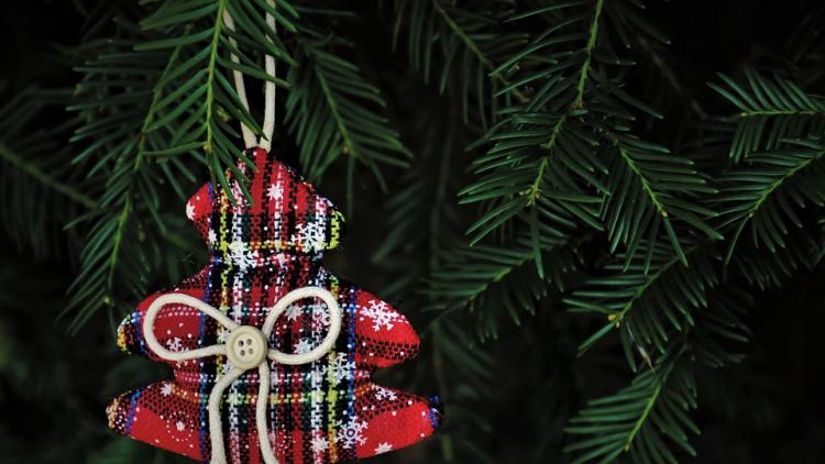 Městské lesy darovaly vánoční stromky do příbramských škol