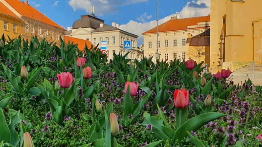 Příjemné jarní teploty začaly probouzet květinovou výzdobu města