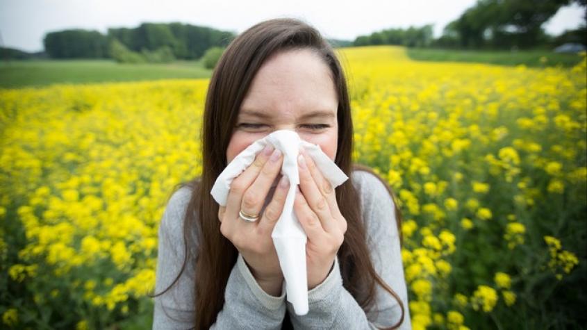 Řepka zaplavila pole. Alergici trpí, astmatici zažívají jedno z nejhorších období v roce