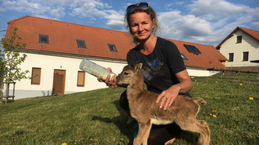 Mládě muflona, lišky, veverky nebo třeba kuny. Ochrana fauny otevírá své brány