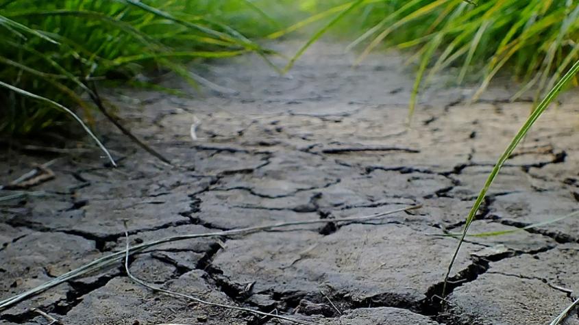 Sucho trápí zemědělce, situace je nejhorší za posledních 500 let