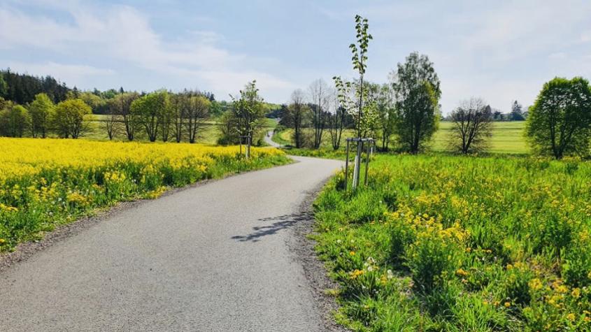 Na cyklostezce do Bohutína zakáže Příbram jízdu na koních, znečišťují cestu
