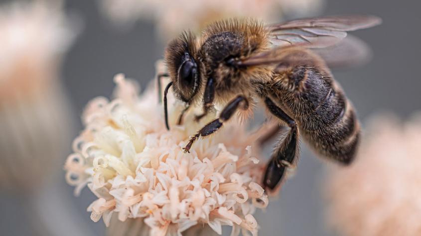 Bodnutí hmyzem může způsobit malý pupínek, ale někdy i boj o holý život