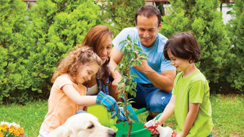 Příbram umožní výsadbu rodinných stromů, budou opatřeny i jmenovkou