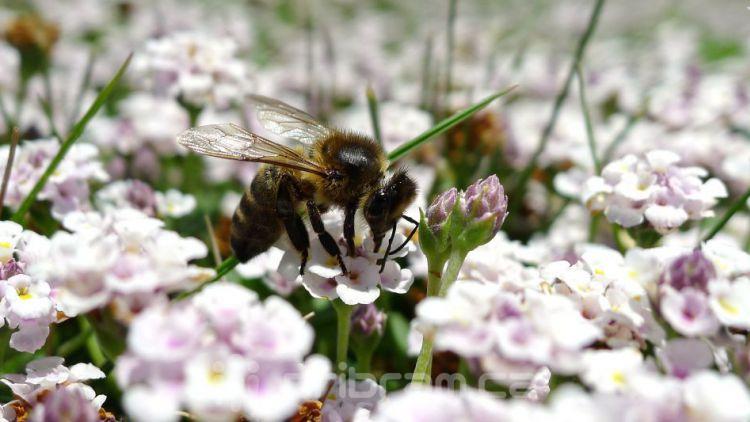 Ve středních Čechách loni výrazně přibylo případů včelího moru