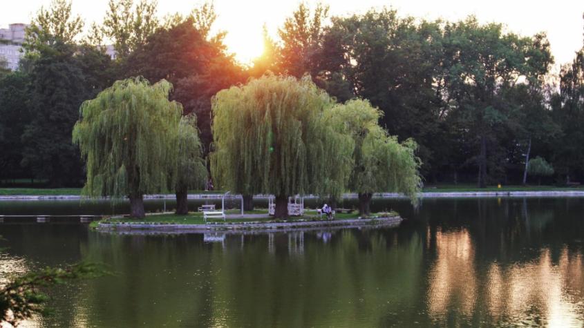 Oproti minulým rokům byla kvalita vody na Novém rybníku po celou sezonu hodnocena nejlepším stupněm