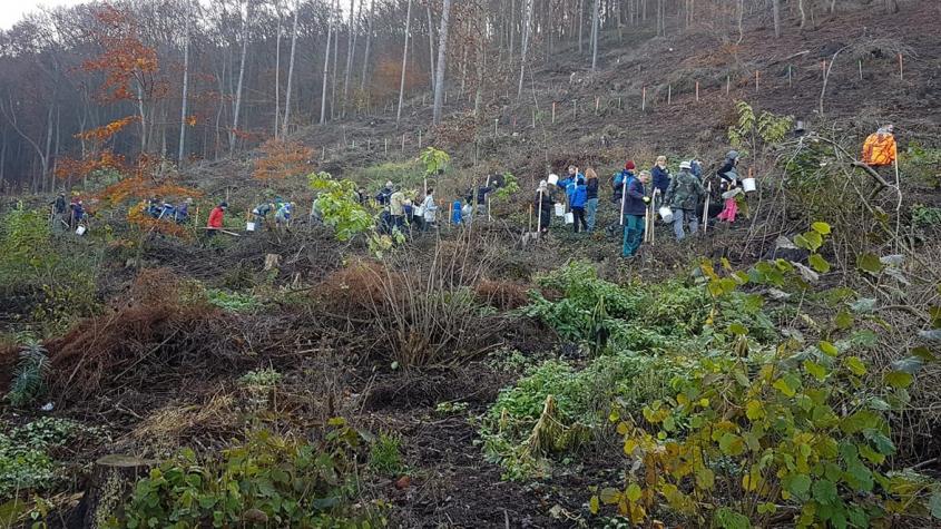 Tisíce nových stromů se i s vaší pomocí vysadí v okolí Milešova a Nového Knína