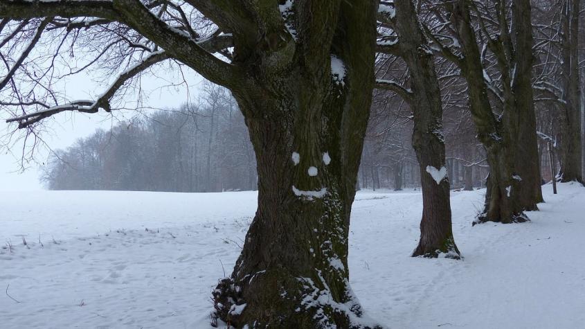 Meteorologové vydali předpověď na listopad. Sněhu se dočkáme až v závěru měsíce