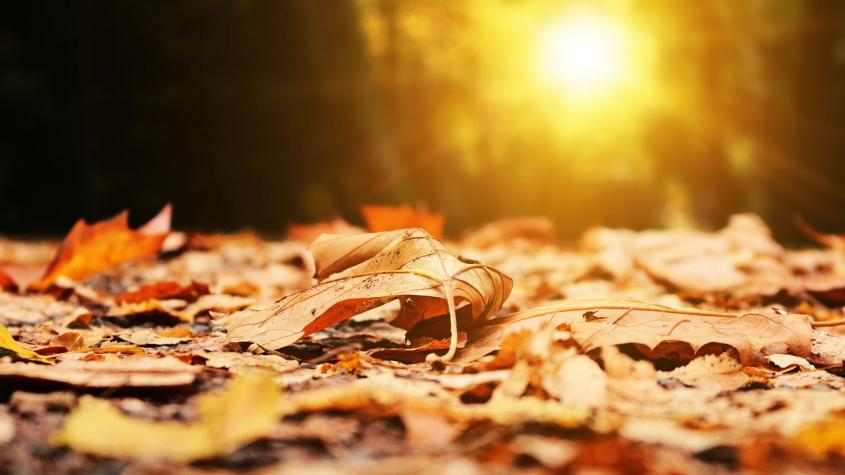 Listopad nabídne nadprůměrné teploty, srážek bude méně