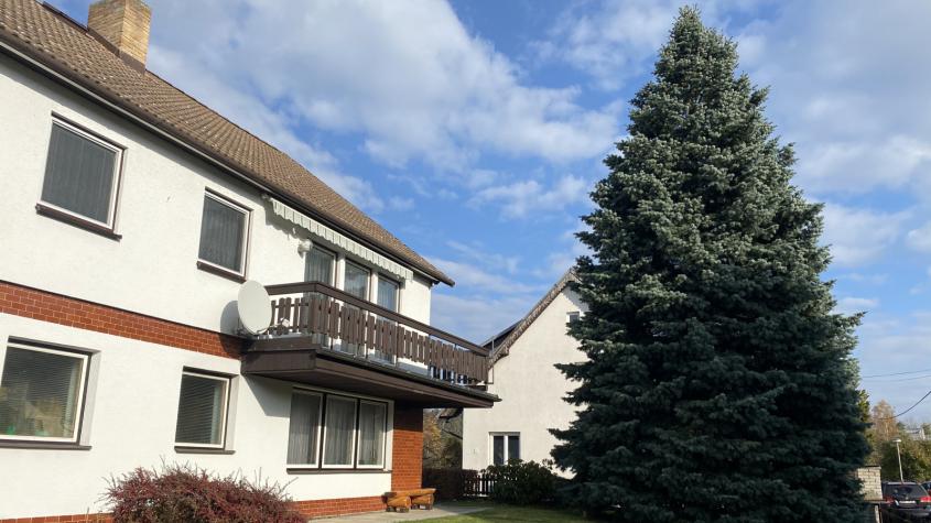 Letošní vánoční strom vyrostl v Milíně, měří patnáct metrů