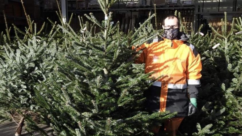 Vánoční stromek pořídíte za tři stovky, ale také za osm set. Jak o něj pečovat, aby vydržel co nejdéle?