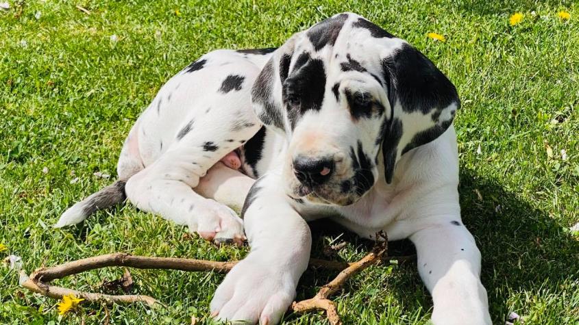 Registr psů bude provozovat veterinární komora, vláda souhlasí