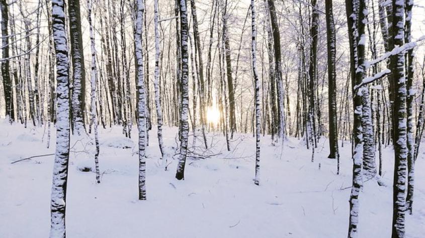 Příští týden má být mrazivý a začne znovu sněžit. Teploty spadnou až k minus patnácti stupňům