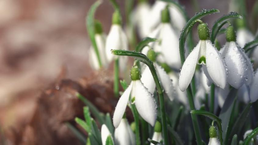Dnes začíná astronomické jaro, počasí ale bude ještě pár dnů zimní