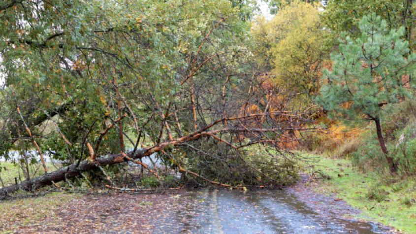 Meteorologové varují: Žene se silný vítr, hrozí komplikace v dopravě